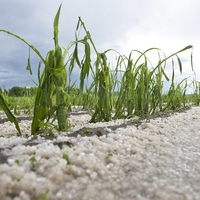 Agrár kárenyhítés: fontos határidő közeleg