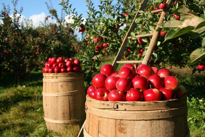 orchard-1872997_1280-822x548.jpg