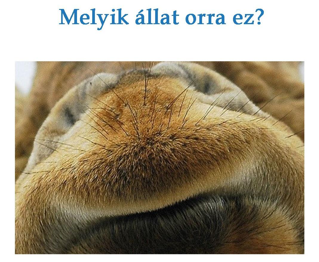 fejtoro_feladvany_vetelkedoszoba_allati_orr.jpg