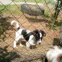 Traccsparti a kerítésnél