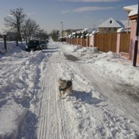 Marci a hóban