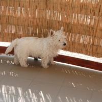 'Most már az erkély is az enyém!' :)