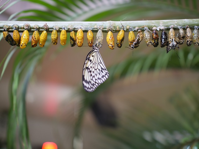 butterfly-life-cycle-3264176_640.jpg