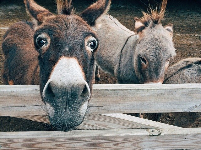 donkey-1725231_640.jpg