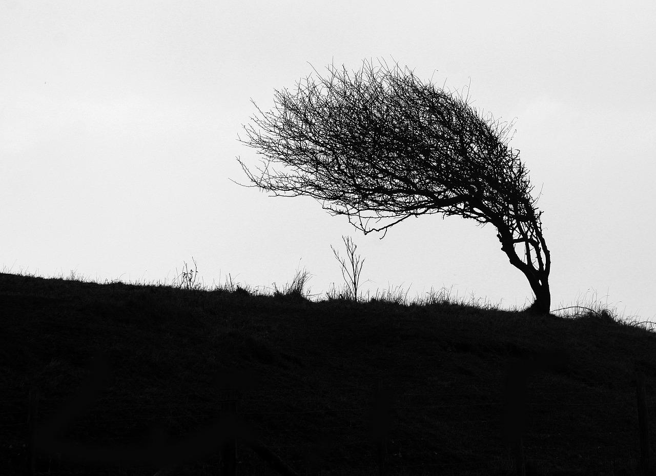 windswept-484796_1280.jpg