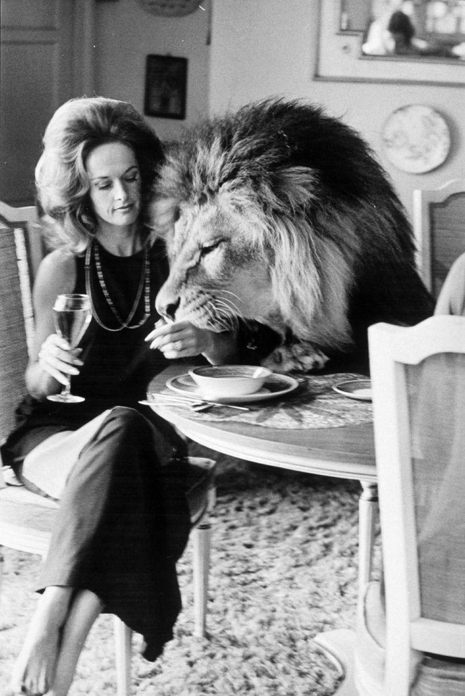 Tippi később nagyon megbánta, hogy Neil, az oroszlán együtt is aludhatott Melanie-val