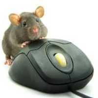 Egérpletyka, azaz word of mouse