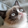 Milliókat érő macskagrimasz?  Hogy lehet egy mém profitábilis?