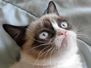 Grumpy-Cat-300x225.jpg