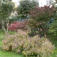 Márciusi teendők - Fák, bokrok, futónövények