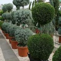 Januári teendők - Konténerben nevelt növények