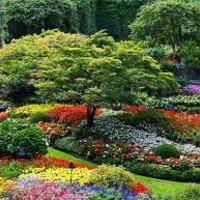 Márciusi teendők - Virágzó növények