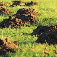 Így tarthatod távol a vakondot a kerttől