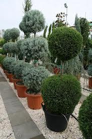 konténeres növények.jpg