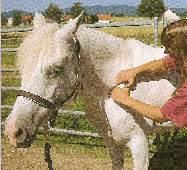 lovak, lómasszázs