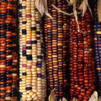 Egzotikum hétvégére: kukoricapesto