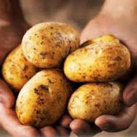 Krumpliföldek a sivatagban?