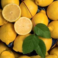 Tárkonyos-citromos pesto & társai