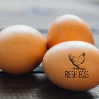 Friss tojás-e a friss tojás?