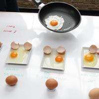 Mindent a tojásról