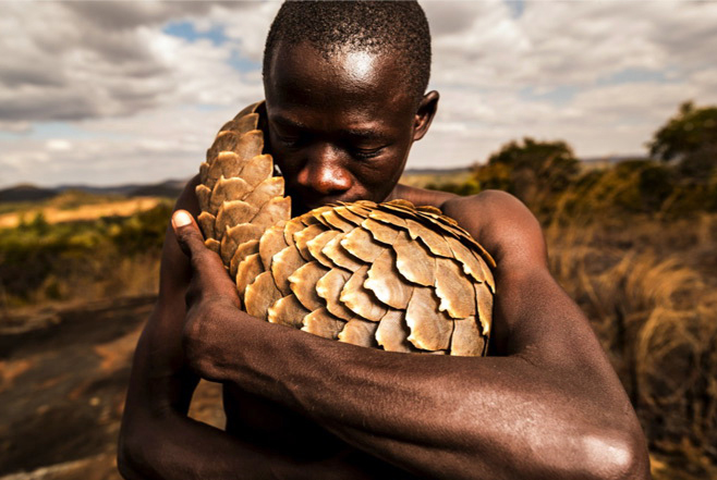 the_pangolin_men_zimbabwe.jpg