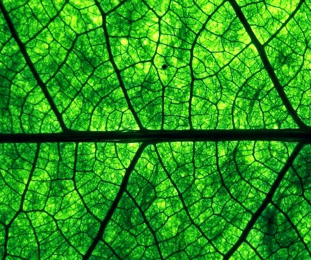 green_leaf.jpg