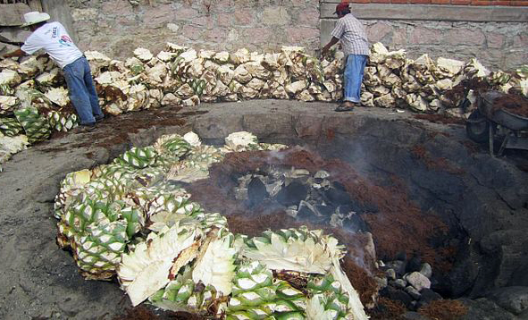 roasting agave.jpg