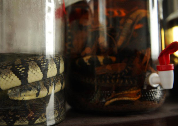 snake_blood_rice_wine_eastern_china.jpg