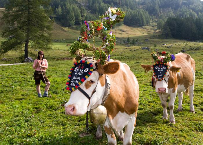 almabtrieb_cows.jpg