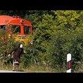 A csiga is lehagyta a vonatot, a Mátészalka-Debrecen vasútvonalon.