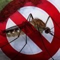 Mikor és milyen módon lesz szúnyoggyérítés Mátészalkán?