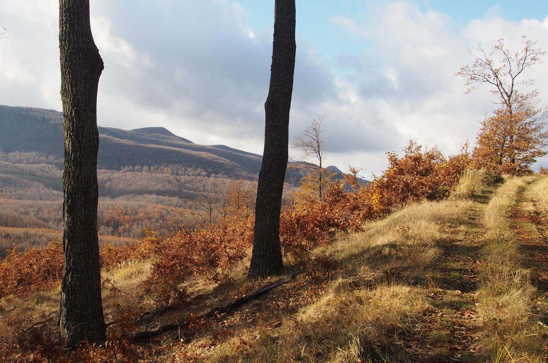 panorama_ut_hajnacs.JPG