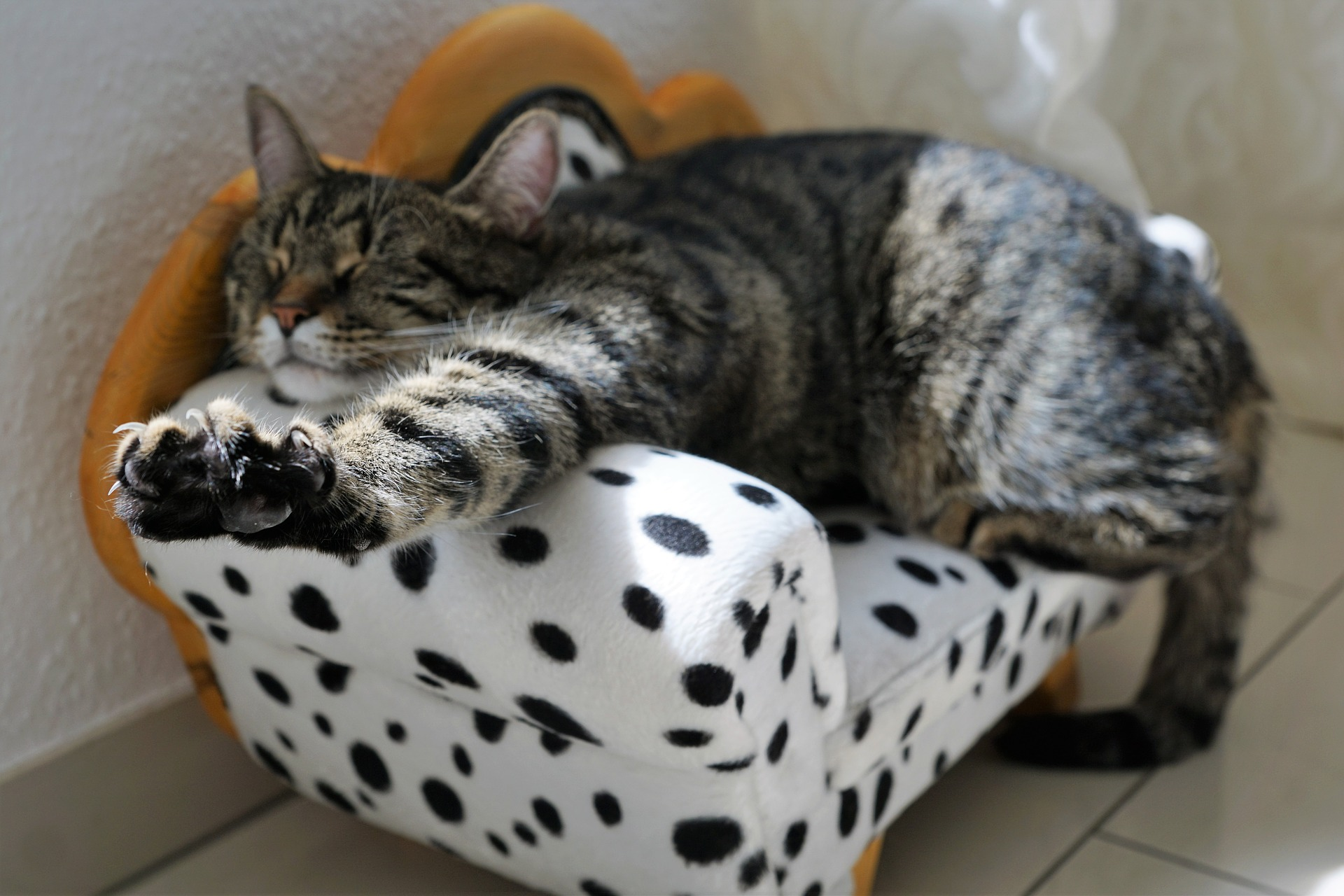 cat-2360863_1920.jpg