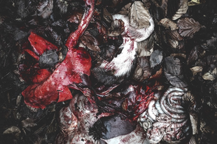 "DEVOID: ""Fake Gleam"" címmel jelent meg új videoklipjük"
