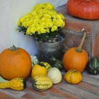 Megérkezett az ősz, tök dömping és egy éves a blog