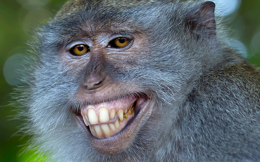 animals-smile_3379238k.jpg