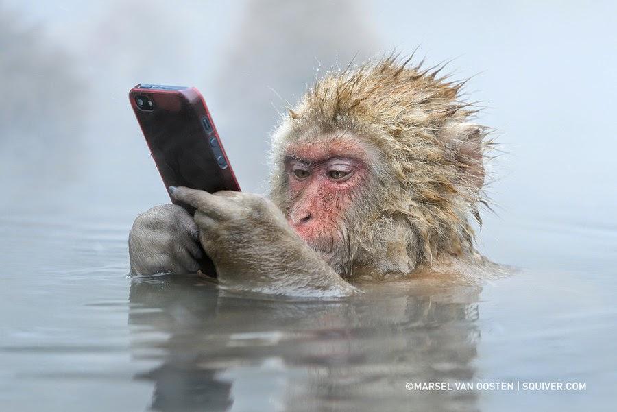 vanooston_monkey.jpg