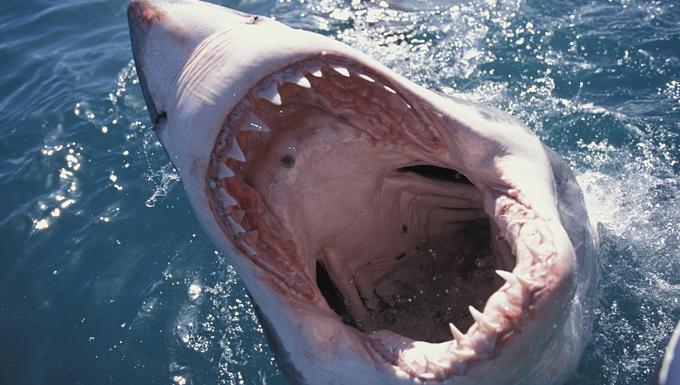 11 tárgy az otthonunkból, amik jóval nagyobb eséllyel ölnek meg, mint egy cápa
