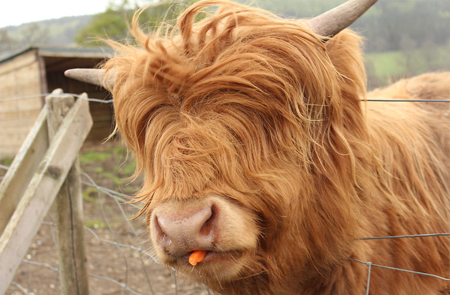 XX-Animals-That-Need-To-Get-A-Haircut-Real-Bad15__880.jpg