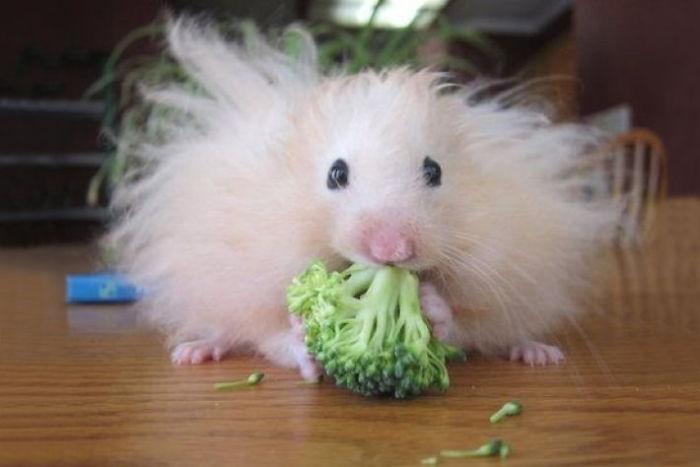 funny-hairy-animals-30__700.jpg
