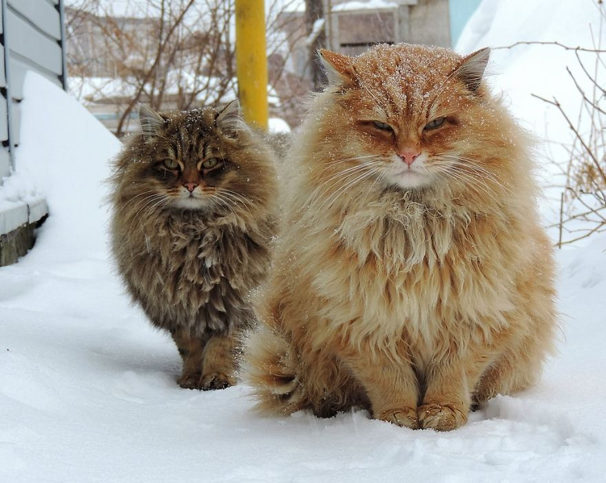 funny-hairy-animals-42__880.jpg