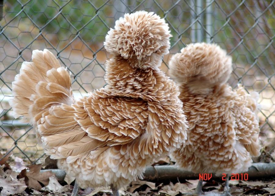 funny-hairy-animals-5.jpeg