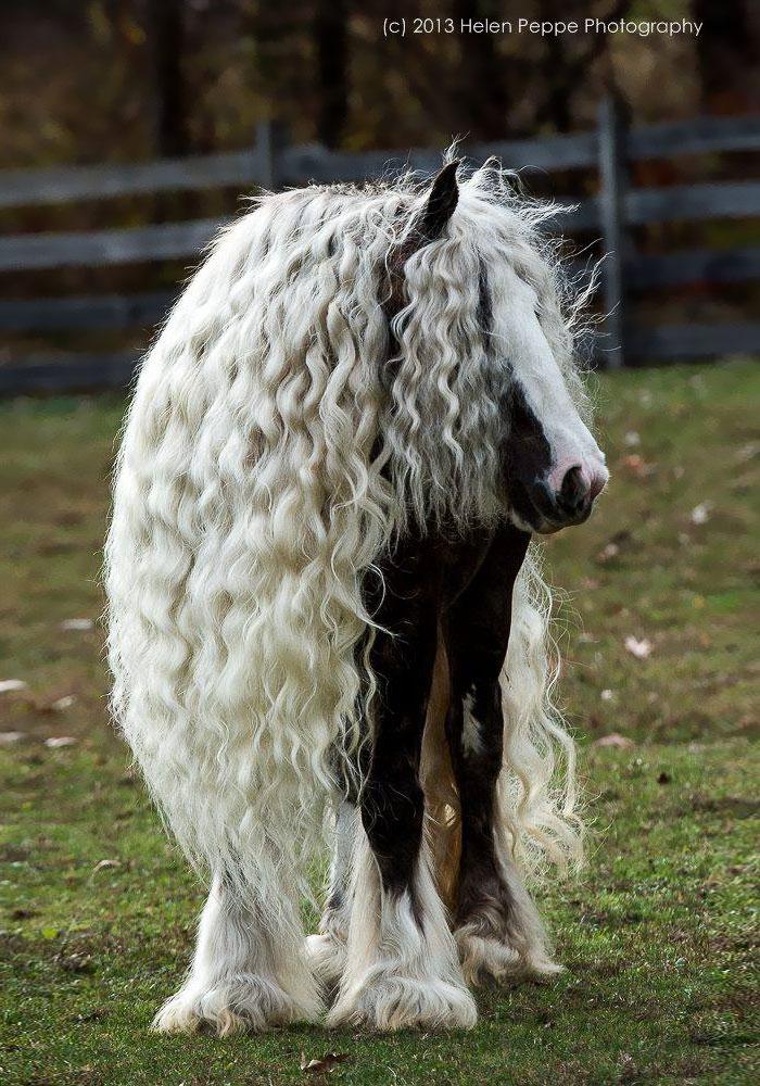 hairy-animals-10101__700.jpg