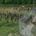 The Walking Dead 4/1: zombieső