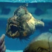 Piranha (2010) - Duplakritika