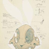 Rajzfilmhősök anatómiája