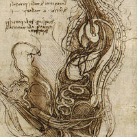 Mágneses rezonancia képek szex közben
