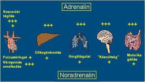 adrenalin.jpg