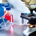 Gyógyító sejtjeink: mi is pontosan az az őssejt, és miben segíthet?