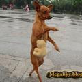 Ügyes kutyus!!